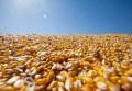 Exportação de milho já é a maior da década