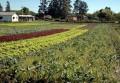 Criada zona livre de agrotóxicos em Porto Alegre