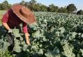 Produção local de orgânicos em alta