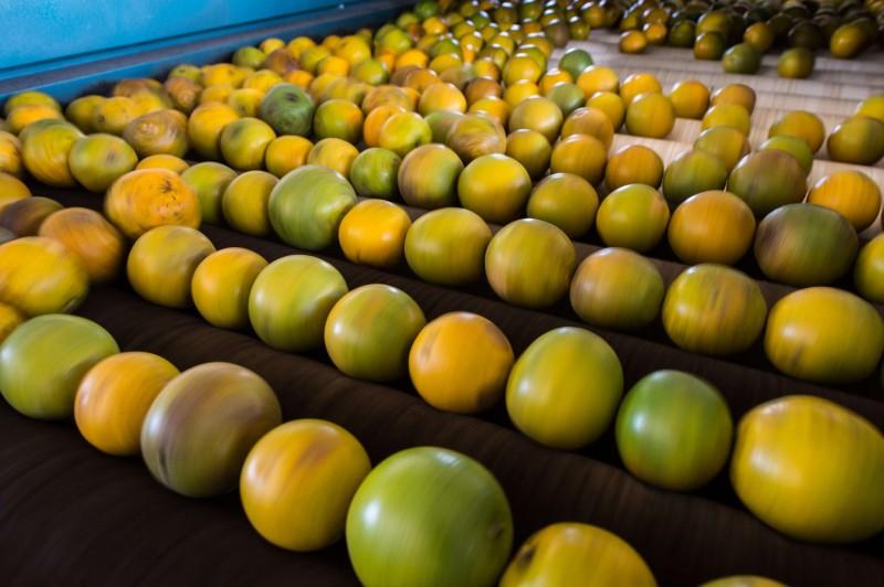 Produtos como laranja, aves e batata registram aumento de preços