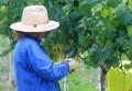 Estudo avalia danos do manejo de agrotóxicos em Anta Gorda