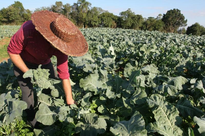 Agricultores podem utilizar a contabilidade rural como ferramenta para gerir melhor os negócios na propriedade