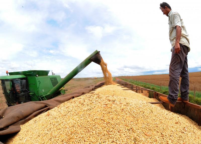 Na soja, principal lavoura do País, queda da colheita nacional foi de 2%
