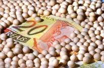 Fim da desvalorização do real até a colheita deve interferir nos lucros