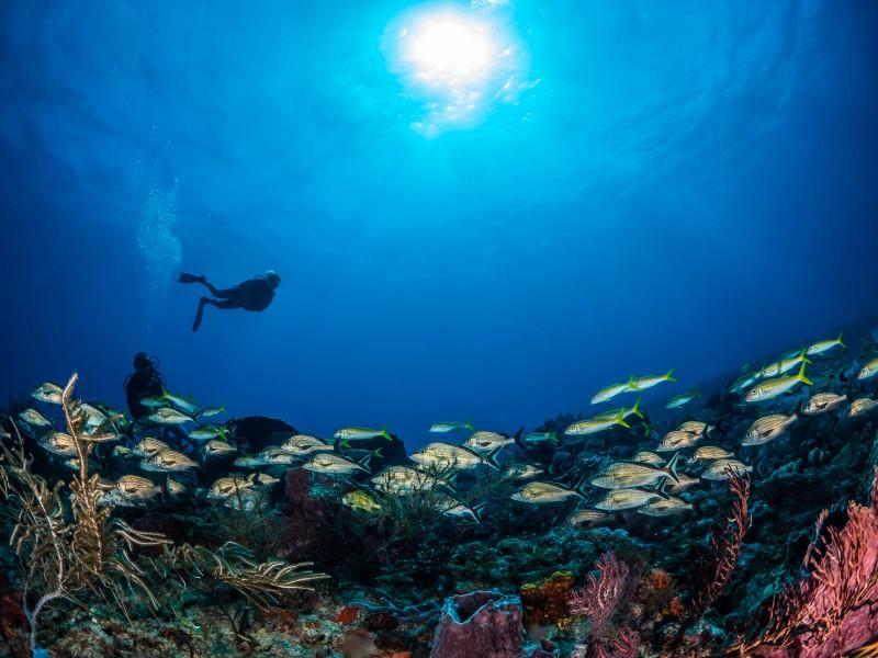 Tobago possui 54 pontos de atrações submarinas, alguns no mar caribenho; e outros, no Oceano Atlântico