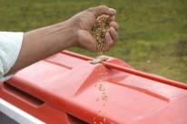 Cultivo de arroz sofrerá atraso devido à alta umidade do solo