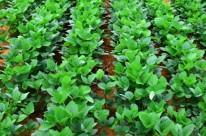 Quem vai produzir a soja mais bonita e mais produtiva do Brasil é o desafio