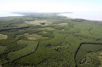 Mais áreas poderão ser destinadas ao florestamento no Estado