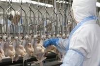 UE embarga frango de 20 frigoríficos do País
