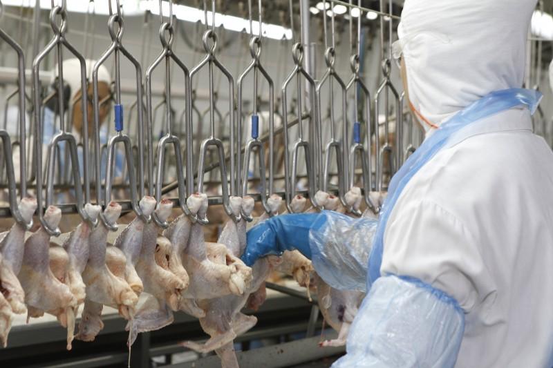 Vendas de carne de frango ao exterior são destaque positivo