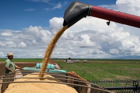Soja lidera o crescimento do agro brasileiro nas últimas décadas