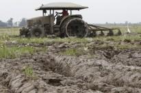 Atraso no plantio do arroz devido às chuvas deve reduzir área da cultura