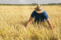 Arroz deve ter a maior redução de ganhos para produtor, cerca de 45%