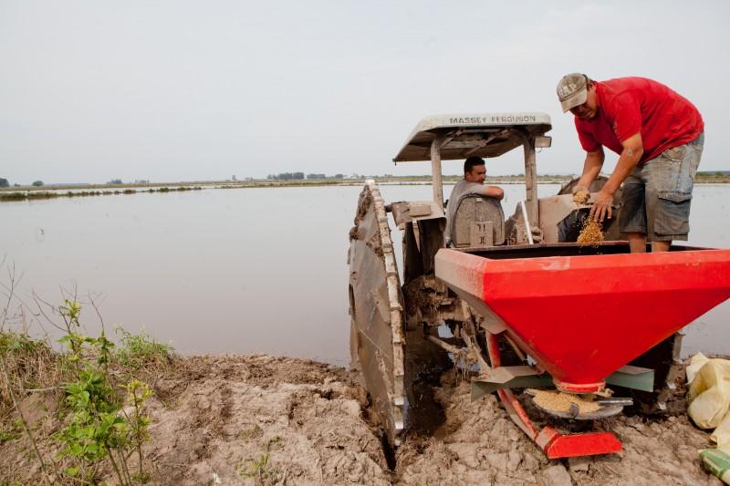 A lavoura de arroz irrigado é a que usa mais água