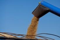 Conab estima diminuição na safra de grãos