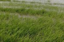 Excesso de chuvas prejudicou plantações gaúchas