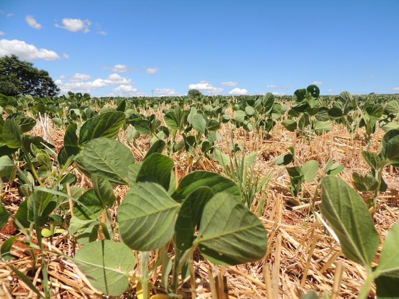 Para a soja, restam apenas 5% da área estimada a ser semeada