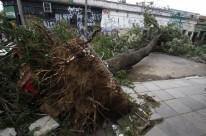 Temporal arrancou vegetais pela raiz, como na rua Lopo Gonçalves