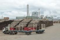 Expectativa é de que, neste ano, a produção alcance a meta de 1,75 milhão de toneladas de celulose