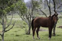 Doença, que teve 22 focos no Estado, é causada por bactéria e pode contaminar cavalos, mulas e burros