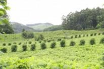 O Vale dos Vinhedos é uma denominação de origem na Serra Gaúcha