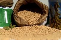 Colheita esperada é de 16 milhões de toneladas, segundo levantamento realizado pela Emater-RS