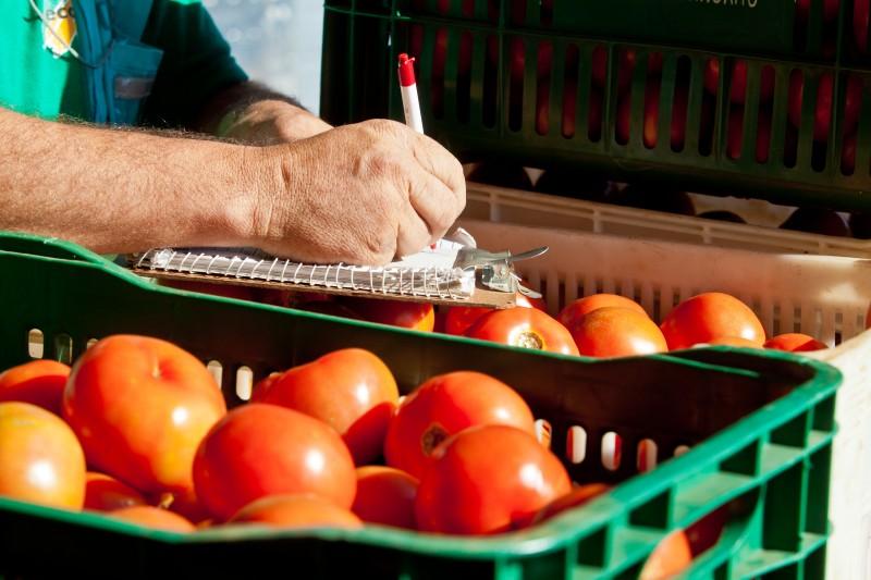 Tomate liderou a queda de preço entre os alimentos essenciais