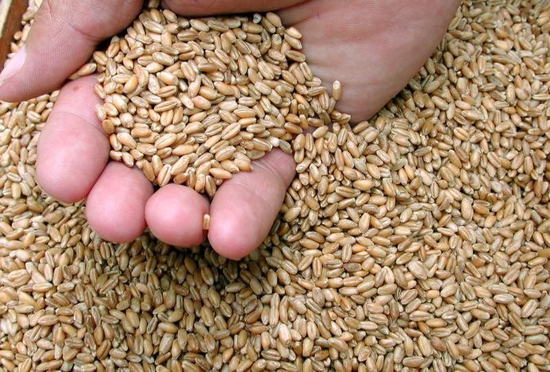 Redução foi motivada pela intensa redução nos embarques de trigo