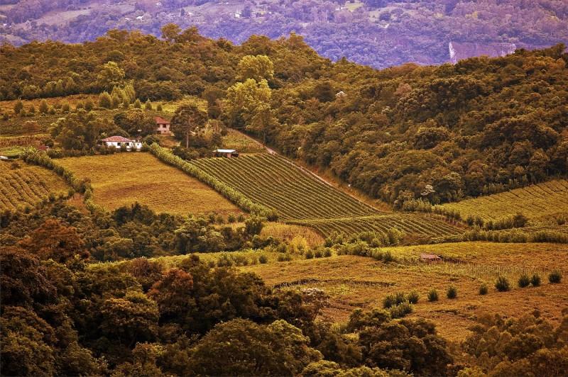 Vale dos Vinhedos, no Estado, figura na lista divulgada pelo Mapa