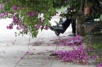 No Parque da Redenção, era possível ver flores caídas no chão, tradicionais da estação