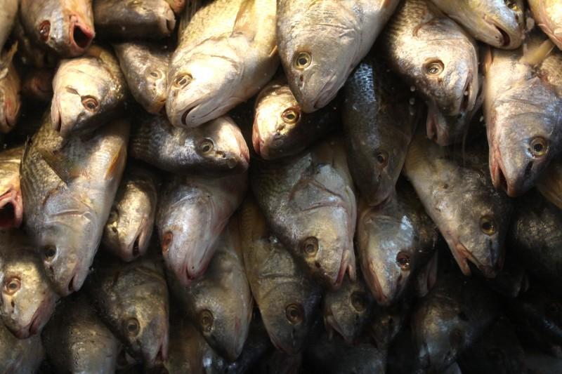 Suspensão das exportações é preventiva e entra em vigor no mês de janeiro