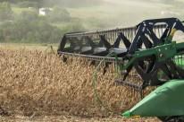 Produtores de soja têm colhido uma média de 3 mil quilos por hectare