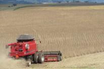 Neste ano, safra de soja pode ultrapassar 16 milhões de toneladas