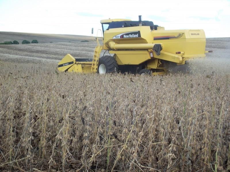 Produção de soja esperada no Brasil chega a 99 milhões de toneladas