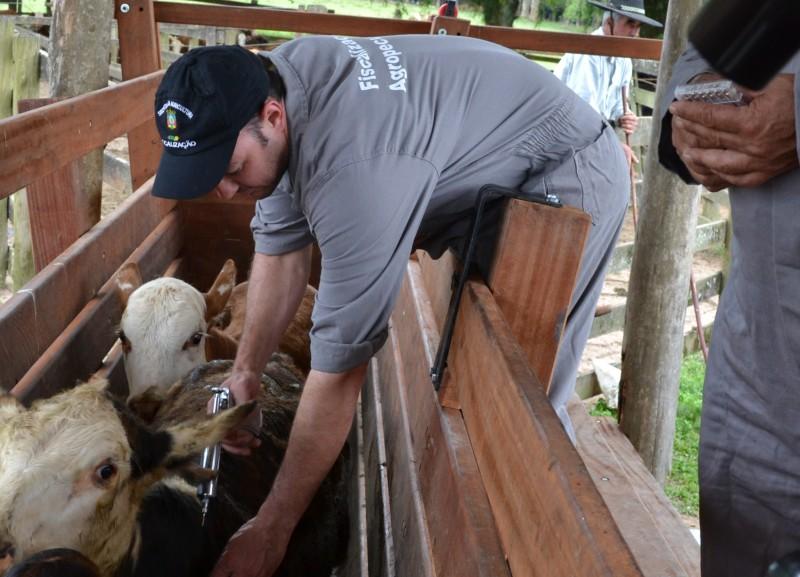 Campanha de imunização do gado gaúcho acontece no mês de maio