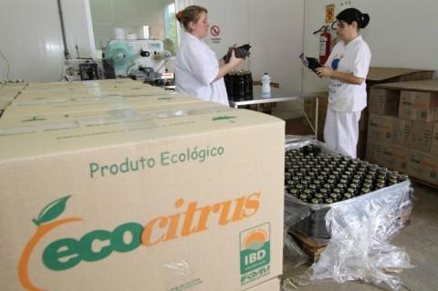 Citros orgânicos da Ecocitrusganham mercado internacional