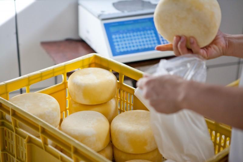 PMEs do segmento lácteo são responsáveis por 65% dos queijos fabricados no Estado