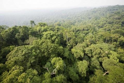 Lei da biodiversidade pode gerar ações judiciais