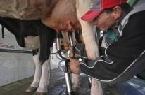 Conselho orienta redução de 10% na produção de leite