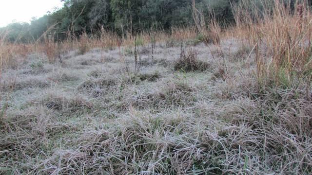 Geada branqueou os campos em Unistalda, prejudicando o gado