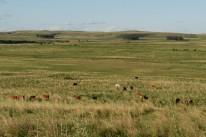 Impasse trava venda de terras a estrangeiro