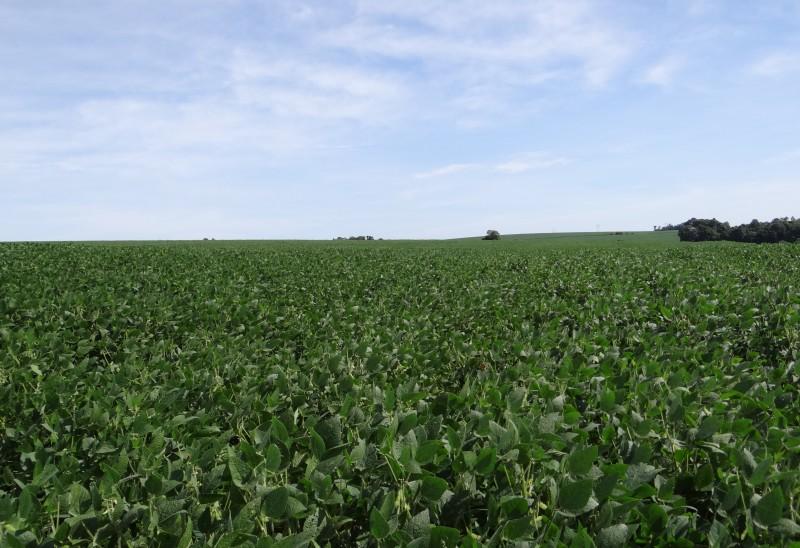 Complexo soja se destacou no valor exportado, com alta de 44,3%
