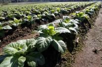 Exportações do agronegócio gaúcho começam 2020 em queda de 23,3%