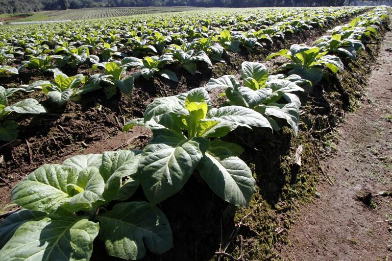 Resolução dificultou acesso ao crédito para os produtores de tabaco