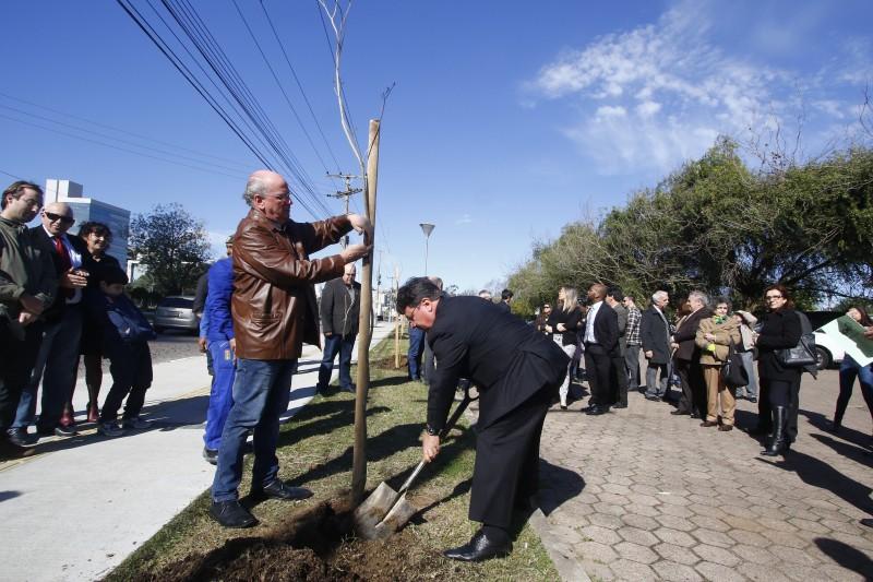 Plantio de seis mudas de ipê-amarelo simboliza compromisso com sustentabilidade