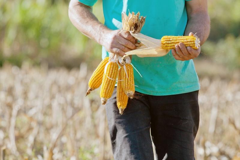 Serão realocados R$ 48 milhões antes destinados às culturas de inverno