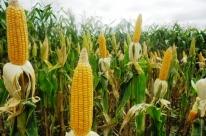Conab aponta recuperação do setor agrícola