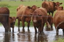 Pecuária bovina e piscicultura crescem em 2016, mostra IBGE