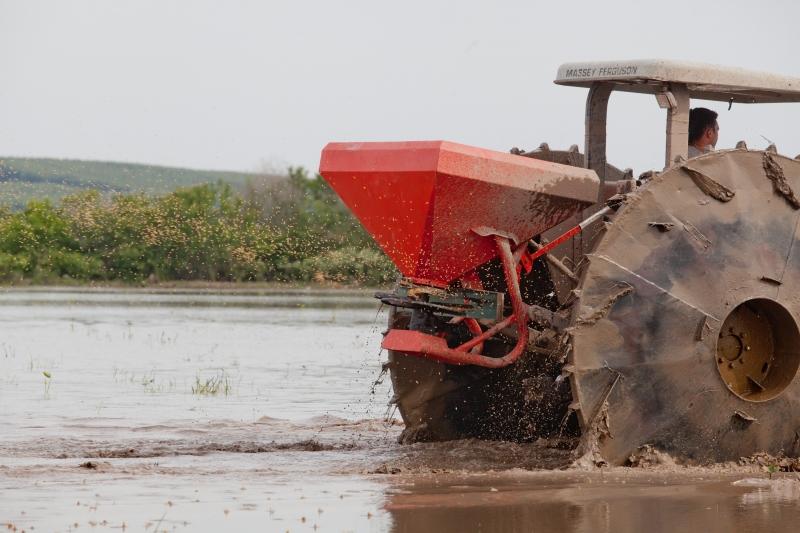 Mais de 21% da área gaúcha estimada já foi semeada, segundo o Irga