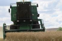 Colheita do trigo avança no Rio Grande do Sul